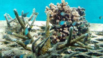 There is only a small window to reduce the impact of carbon emissions on reefs, researchers say.