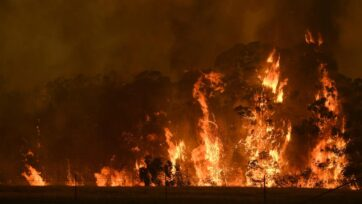 Critics say a paper downplaying the link between logging and the Black Summer fires is misleading.