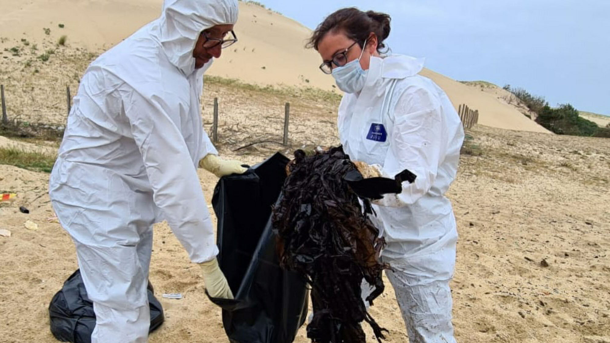 Beached Whale Ate 35 Pounds Of Chip Packets And Plastic Bags Before Death