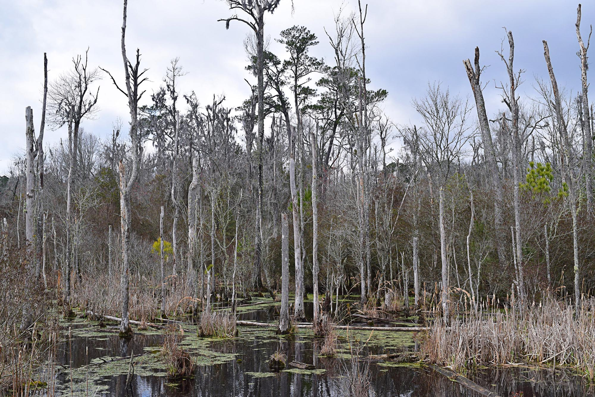 Study: Ghost Forests Boost Carbon Dioxide Emissions