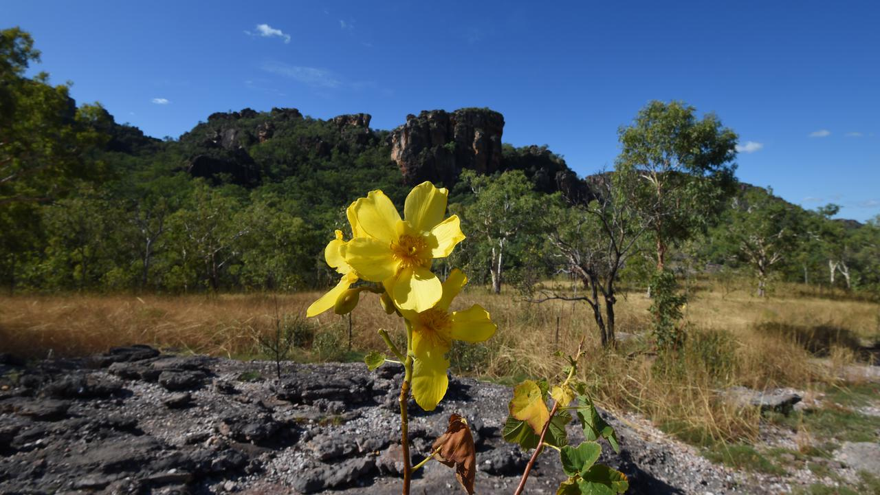 New Strategy To Protect Threatened Species In Australia