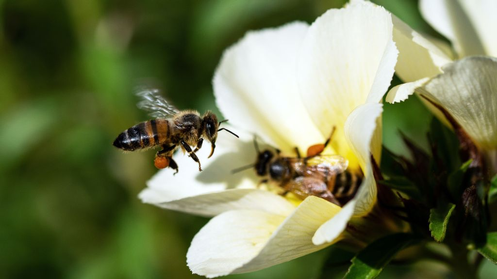 Stung: Deforestation Has Led To A Sharp Decline In The Bee Population