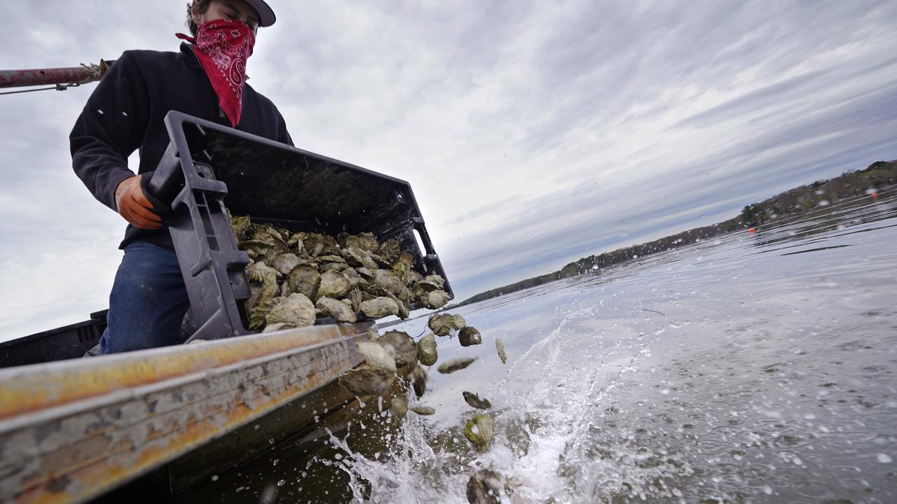Australian Oyster Industry Recovers From Flood, Fire