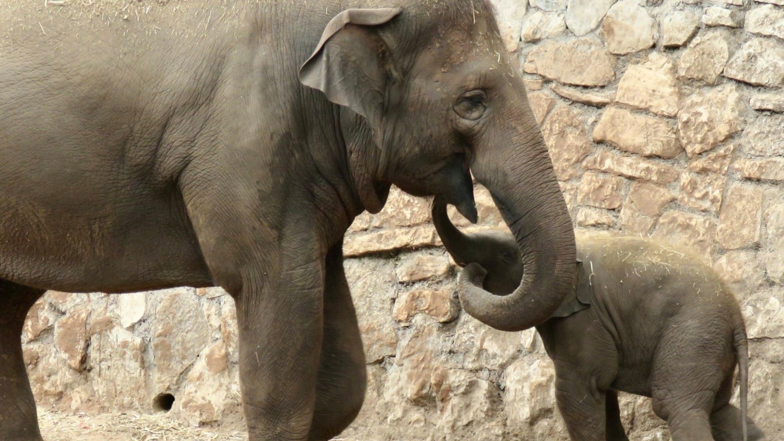 Tusk Force: Zoo Elephants Protect Their Young When They Hear An Air-Raid Siren