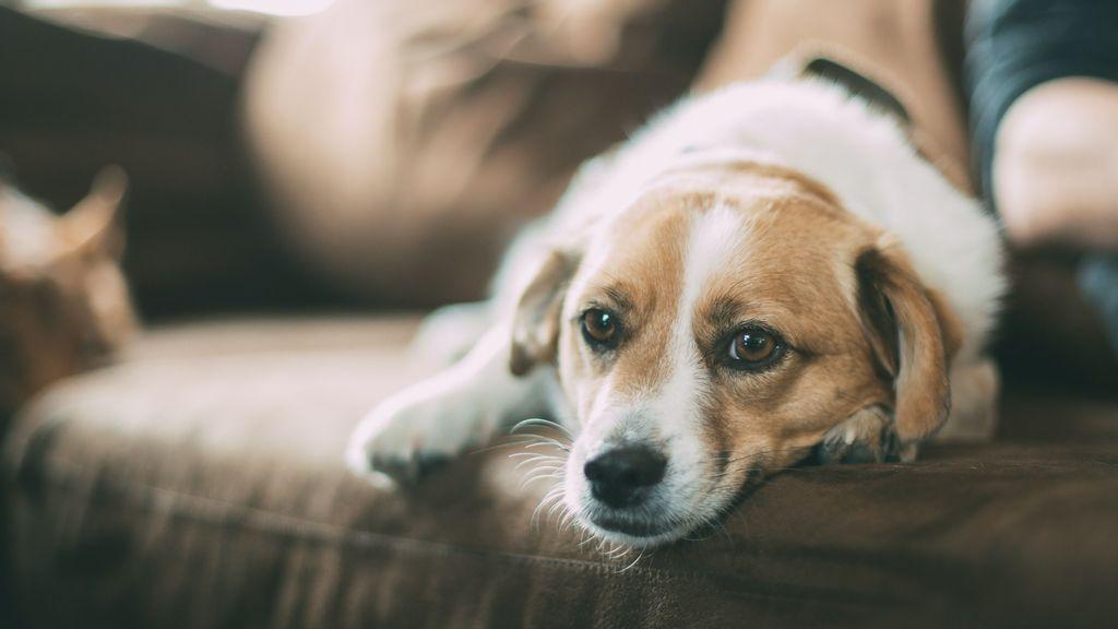 El humo de cigarrillo podría dañar a los perros
