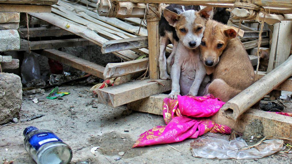 Animales abandonados llenan las calles mexicanas