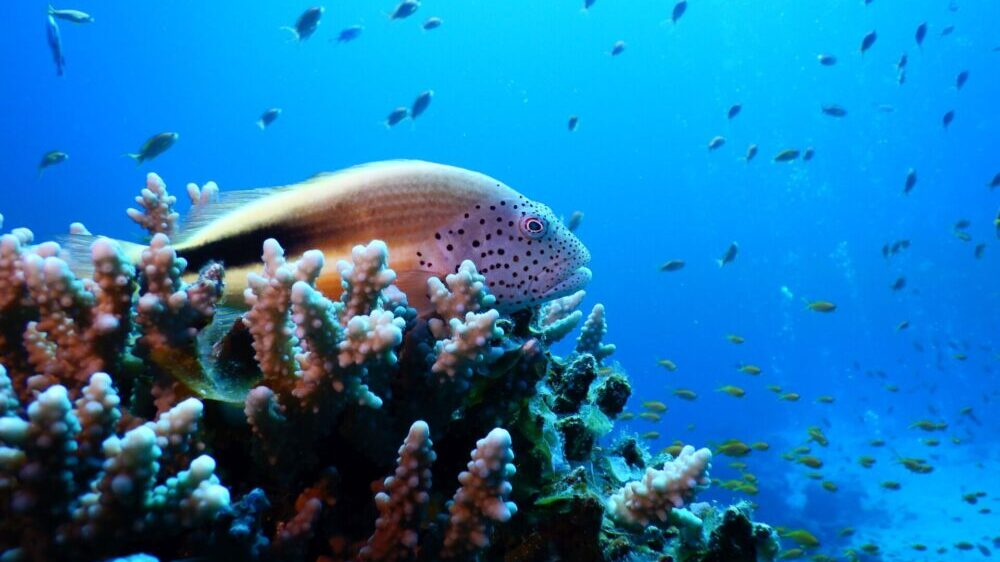 Corals In Red Sea Survive Temperature Increase. Cold? Not So Much