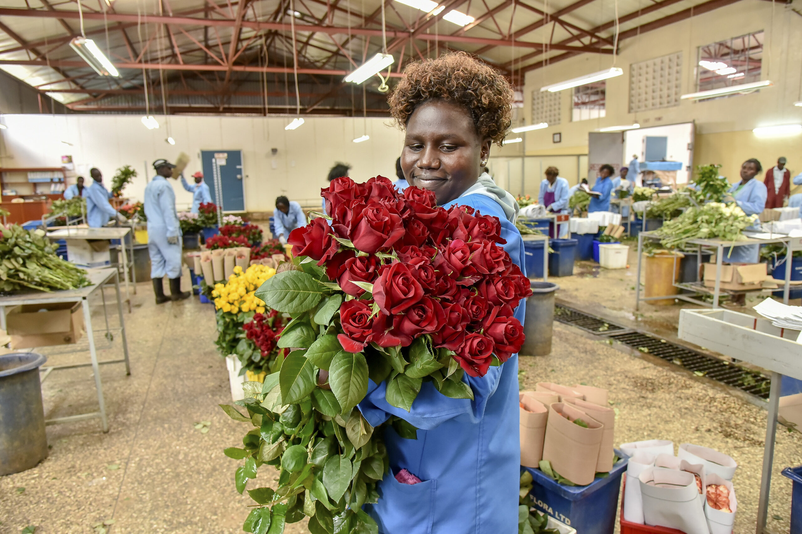 Blooming Again: Kenya Flower Sector's Future Rosy After Withering Under Covid-19