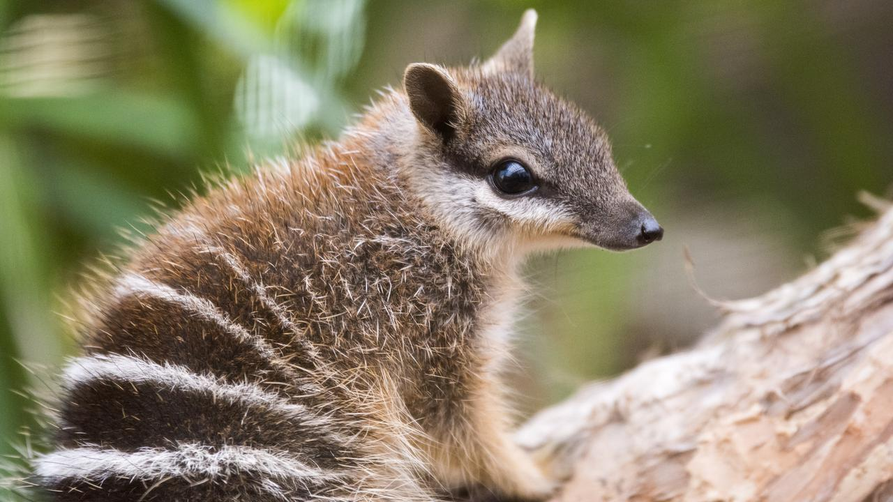 Bleak Future For Some Threatened Species In Australia, Say Activists