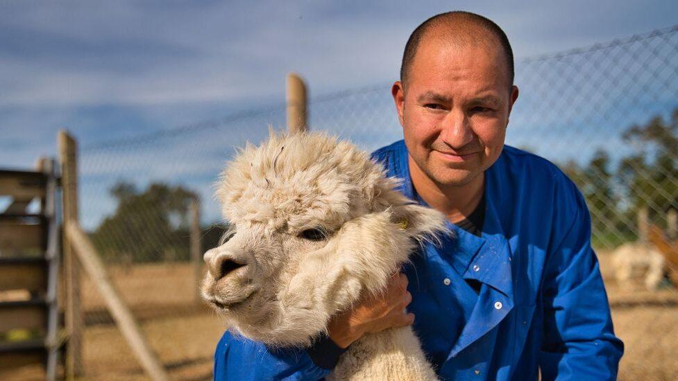 Alpacas' Antibodies Could Neutralize COVID-19 Variants