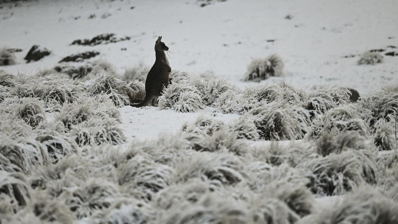 Antarctic Cold Blast To Bring Ice And Snow In Australia