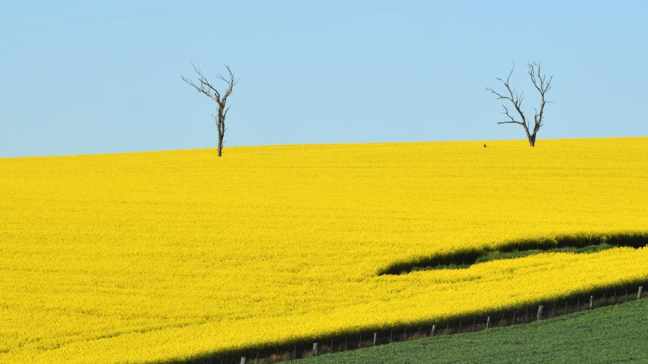 Australian Farmers To Plant Record Winter Crop Area