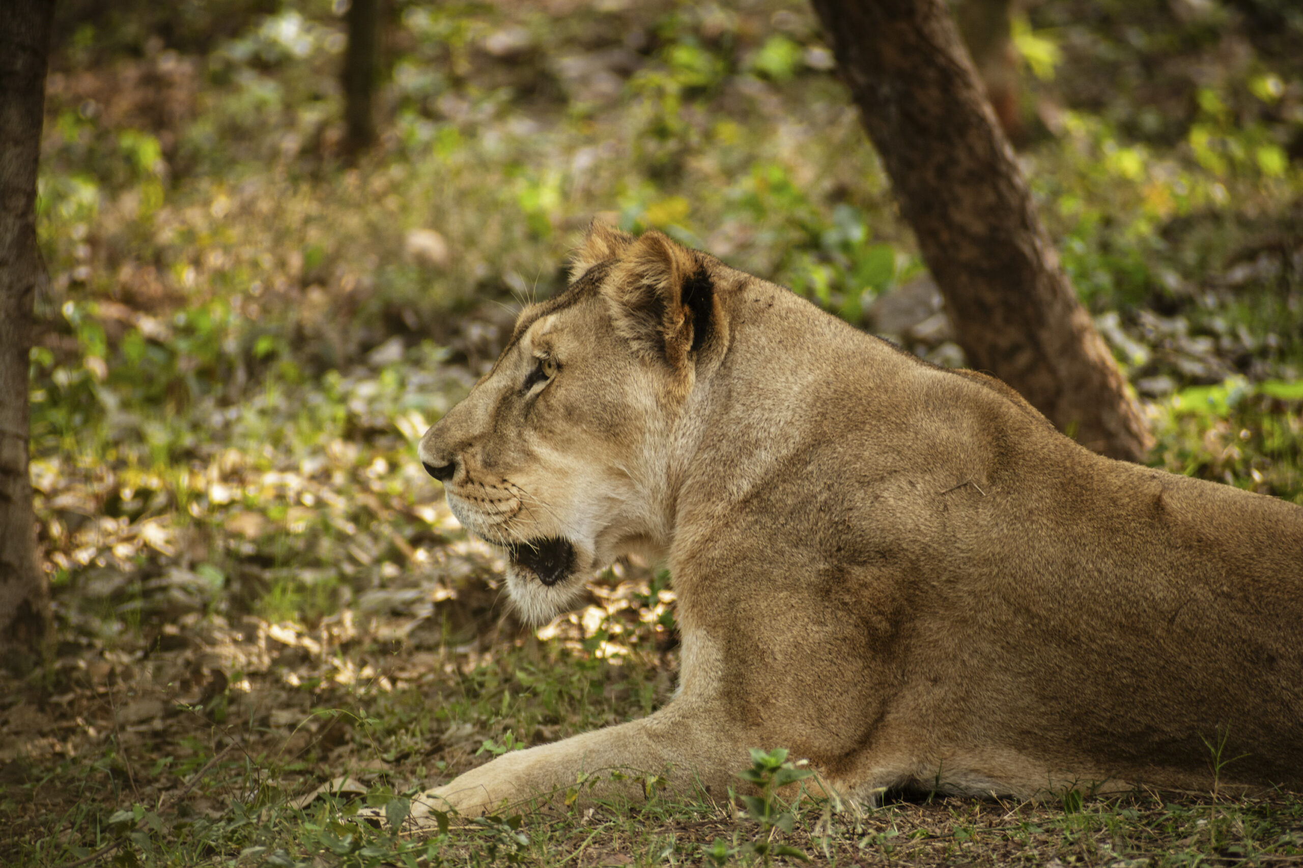 India Reports First Animal Death Due To Covid Despite Shut Zoos