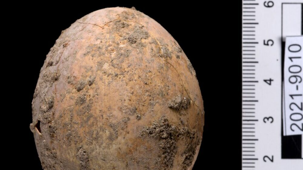 Hencredible Find: Archeologists Discover Undamaged 1,000-Year-Old Chicken Egg