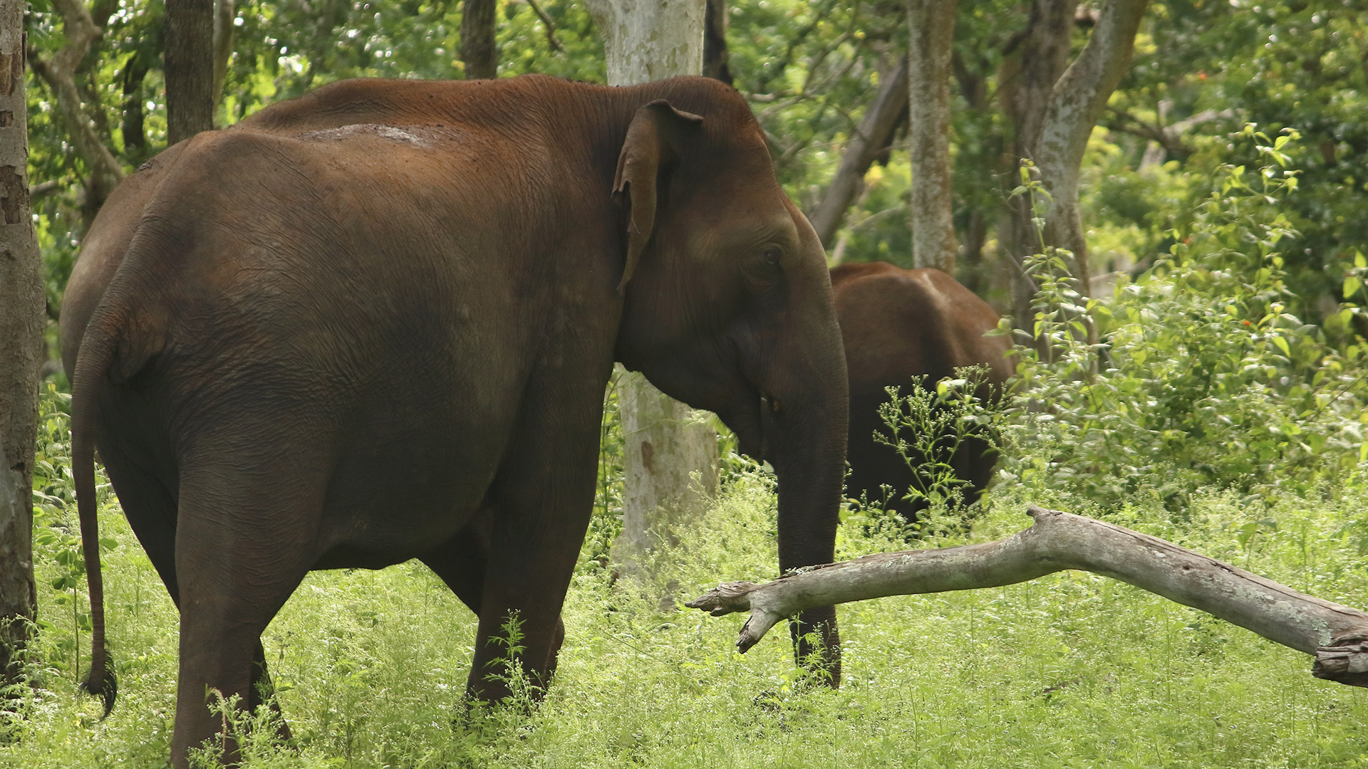 Jumbo Mystery: Activists Reject Thunderbolt Theory For 18 Elephant Deaths In India