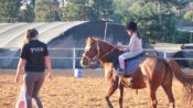Coping With Covid In The Saddle Of A Therapeutic Horse