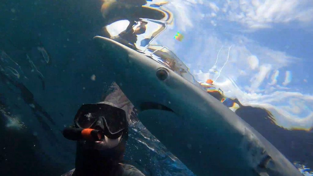 VIDEO: Former 'Shark Week' Host Swims With Sharks To Raise Awareness