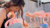 VIDEO: Tickled Pink: The Flamingo Rescuer Saving Birds With A Caring Cuddle