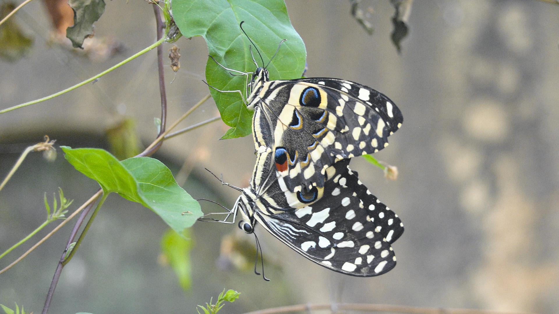 Kenyan Women Reap Big From Butterfly Farming