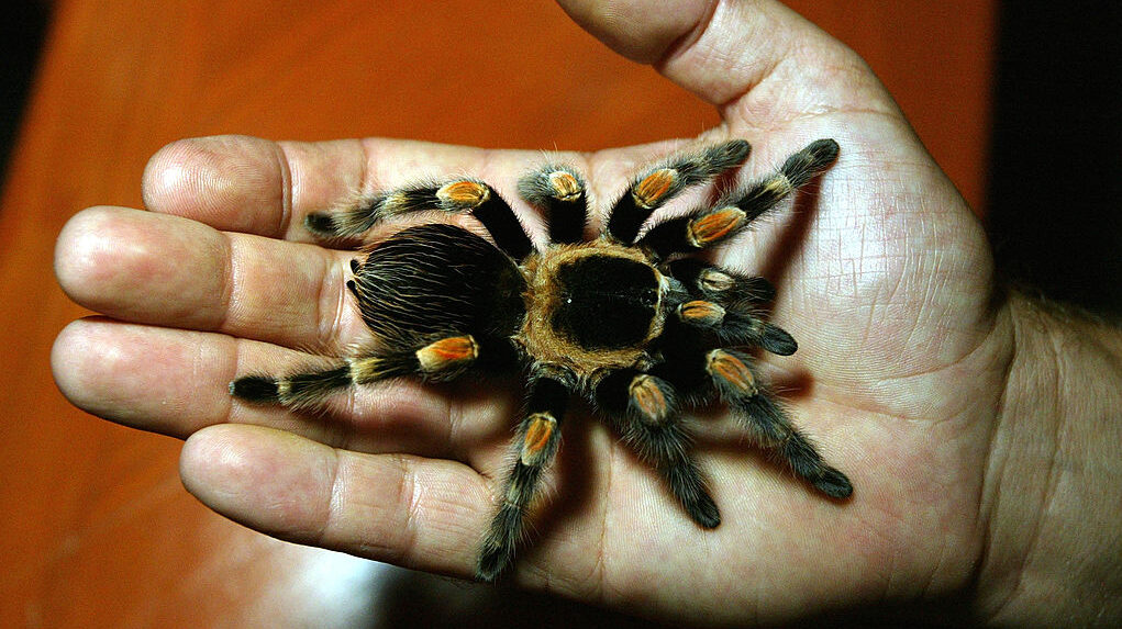 Mexico: Tarantula's Paradise