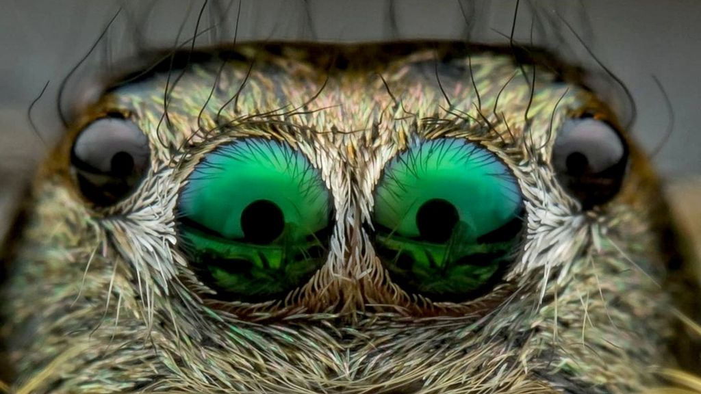 Spider Scan: Wildlife Cameraman's Very Close Encounters With The World's Scariest Web Spinners