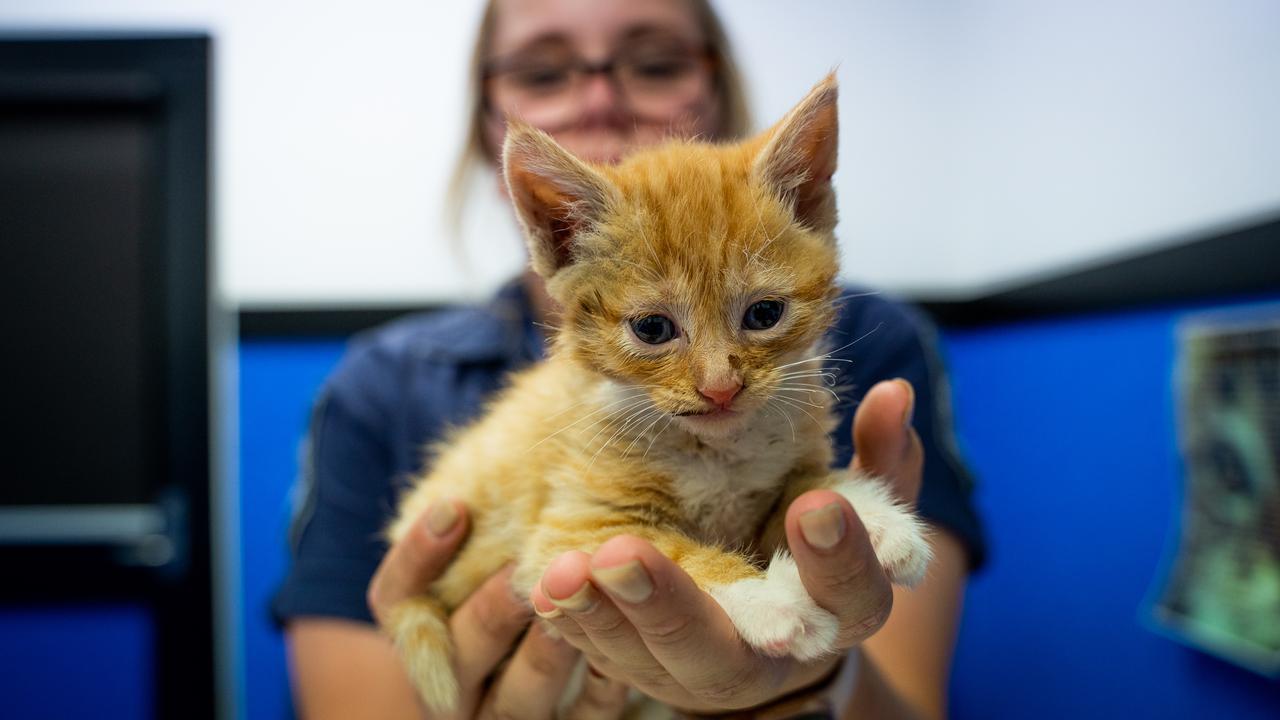 Australian Man Filmed Kitten Taped To Firecrackers