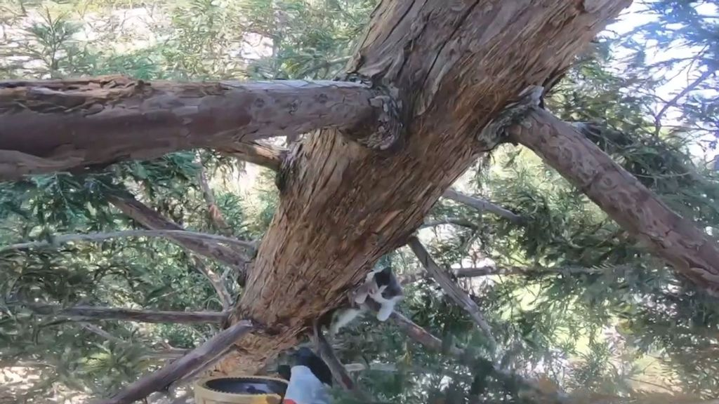 VIDEO: Firefighter Rescues Kitten Stuck 60 Feet Up Tree