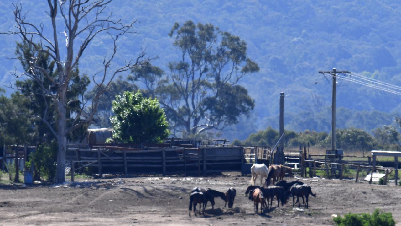 Animal Cruelty Focus In Australian High Court Bid