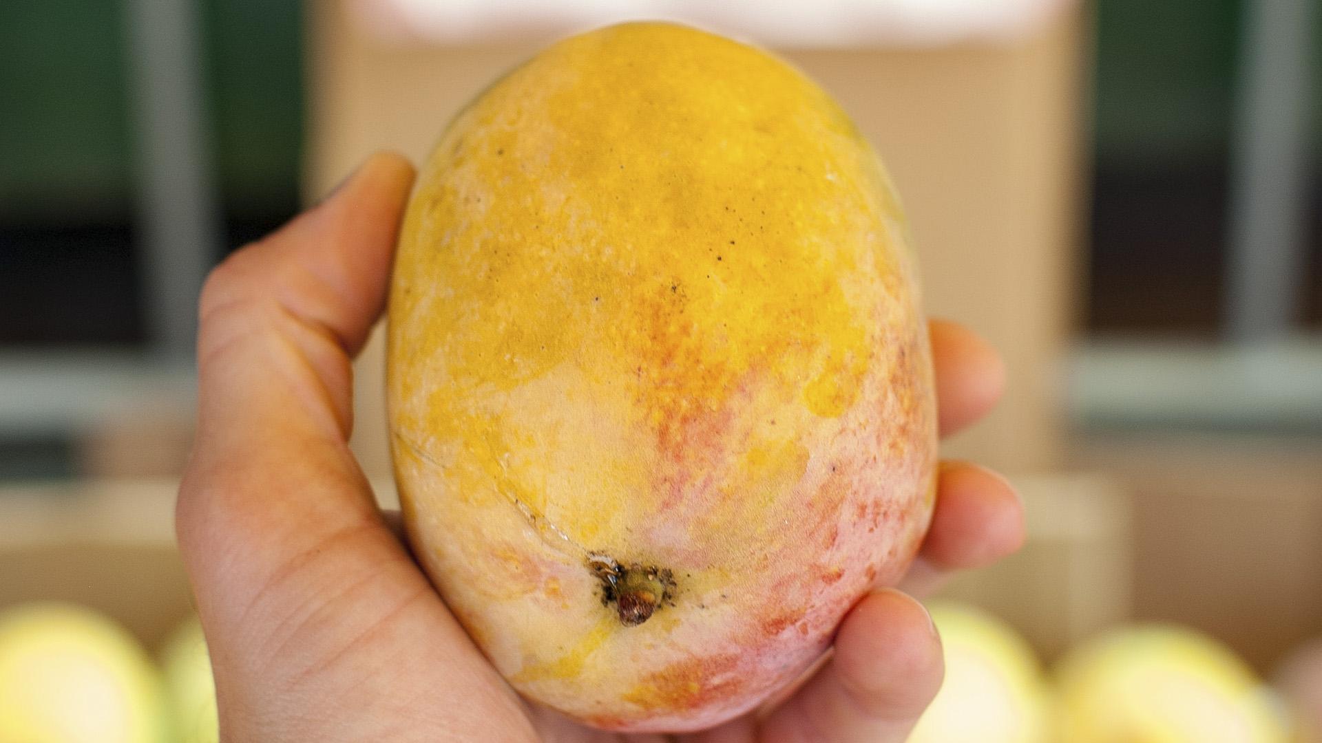 Two Brothers Grow World's Heaviest Mango Variety