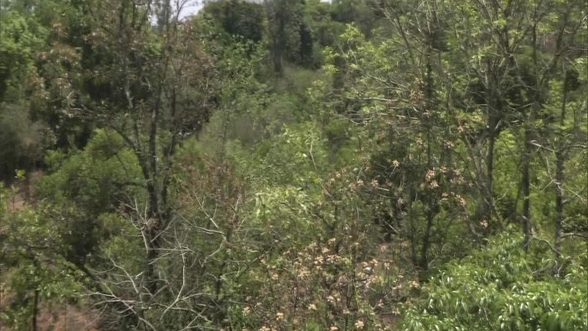 Indian Entrepreneur Converts 21-Acre Barren Land Into Forest