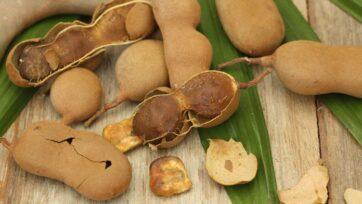 La pulpa de tamarindo se usa mucho en la cocina mexicana, sobre todo en los dulces y las bebidas. (Gobierno de México)