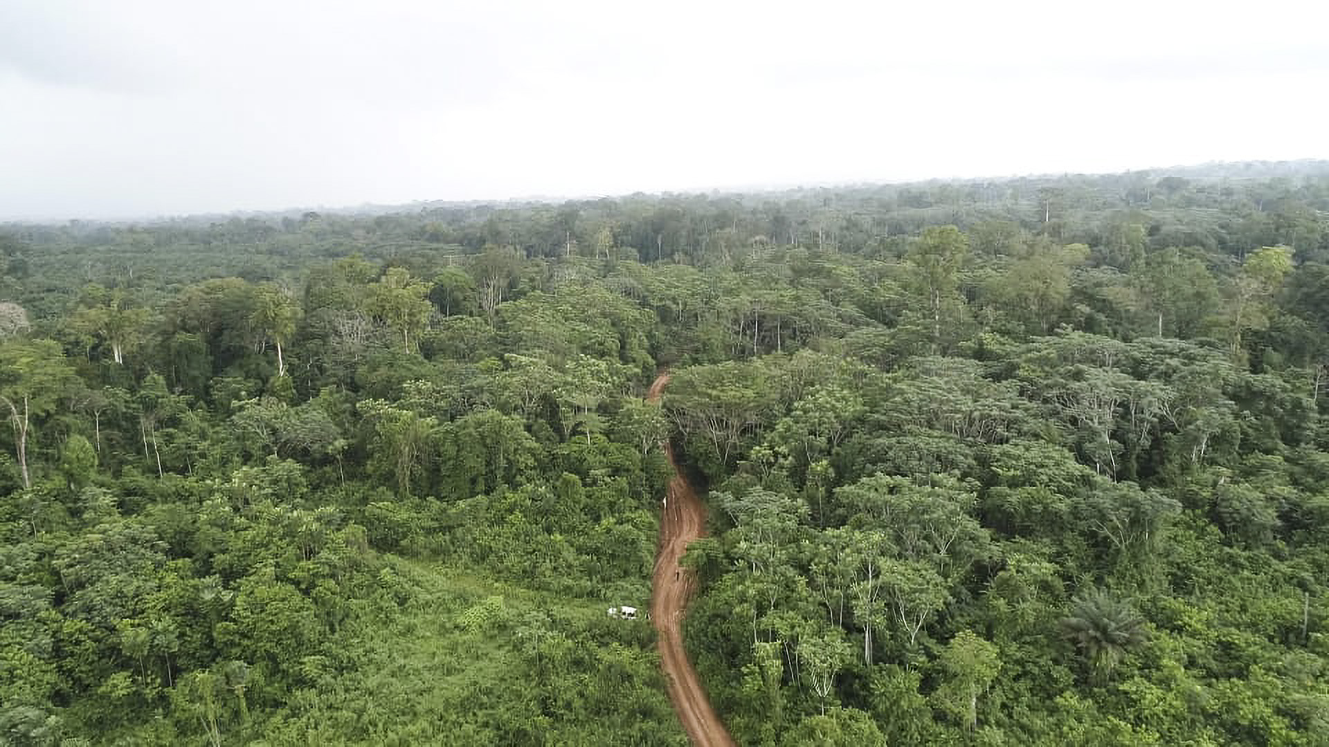 Treesy Money: Tiny Gabon Wins $17 Million Payout For Forest Conservation