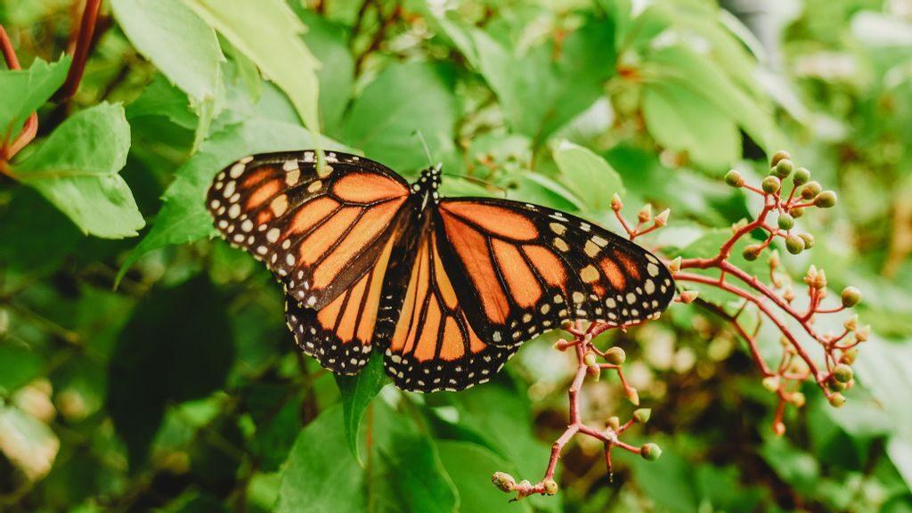 Walking Among A Sea Of Butterflies