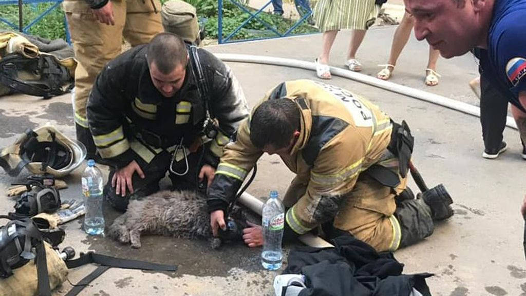 VIDEO: Mew Heroes: Firefighters Revive Singed Cat Saved From Burning Building