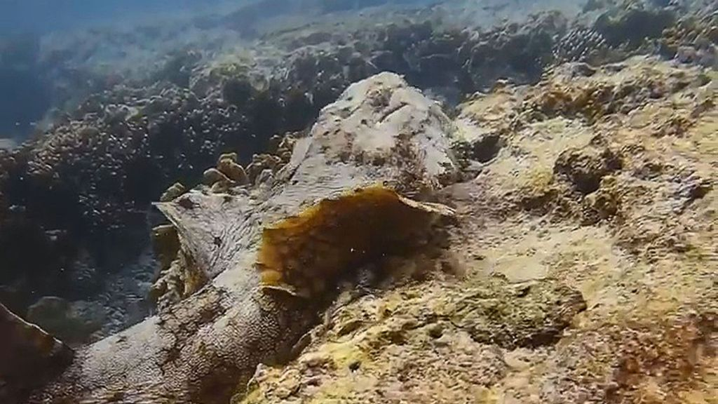 VIDEO: Reef Encounter: Diver Comes Face To Face With Camo Carpet Shark