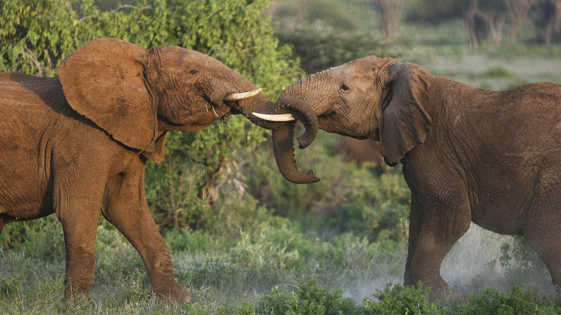Elephant Dung Soap Is Cleaning Up As A Beauty Treatment