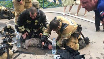 Bomberos suministran oxígeno a la gata rescatada del incendio. (@mchs.34/Zenger News).