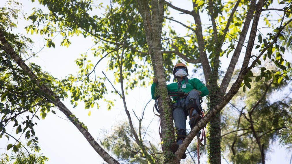 Tecnología única empleada en la reforestación después de colapso de represa en Brasil
