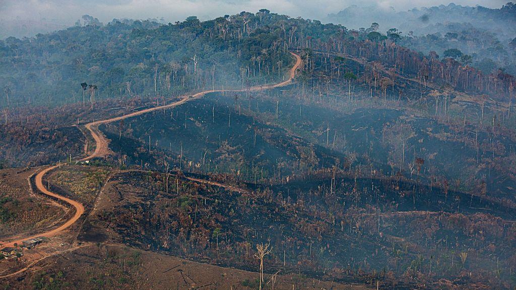 Deforestación en Brasil: descuido, contrabando y explotación económica