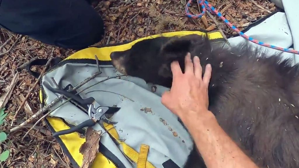 VIDEO: Looking Pail? Rangers Rescue Bear With Chicken Feed Bucket Stuck On Her Head