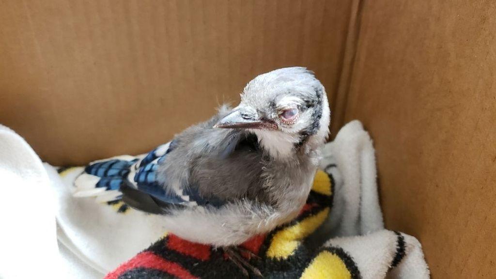 Mass Die-Off Of Birds Raises Concerns