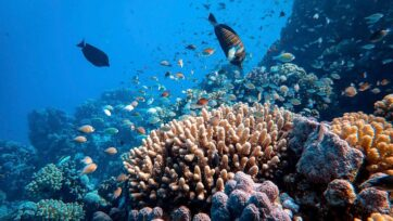 (Representative image) The results of a new study show that the loss of stony coral species could have devastating consequences for the marine ecosystems they inhabit. (Francesco Ungaro/Unsplash)