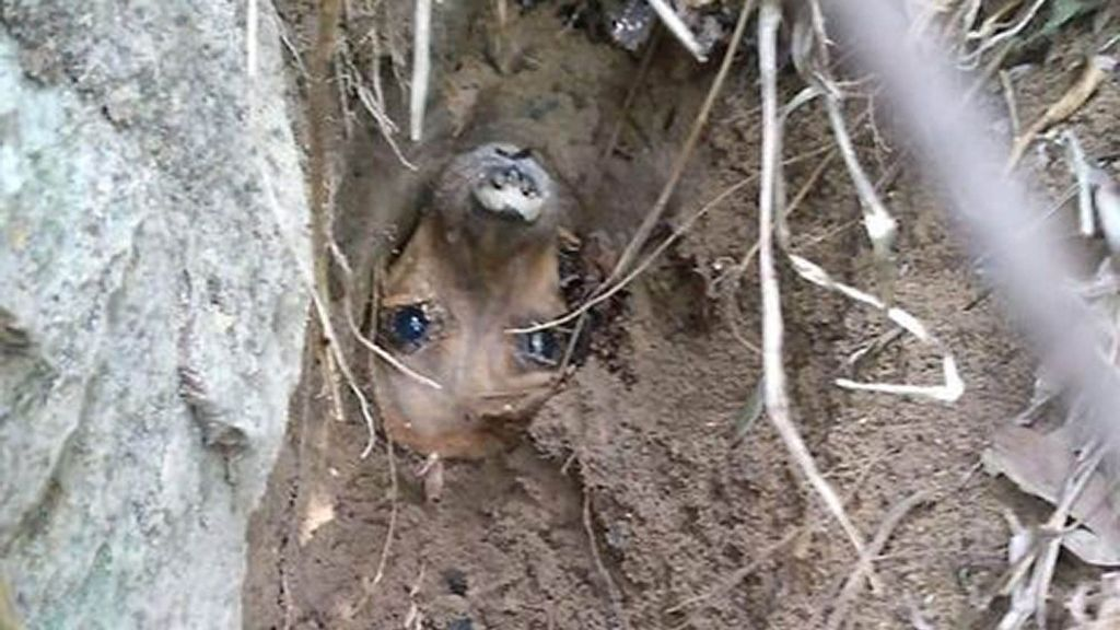 VIDEO: Get Me Howl Of Here! Pup Saved After Five Days Trapped By Jungle Landslide
