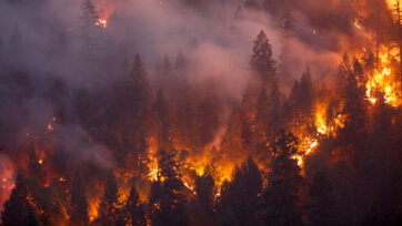 Smarter News Quiz: Forest Fires, Former CEOs and Free Lunches