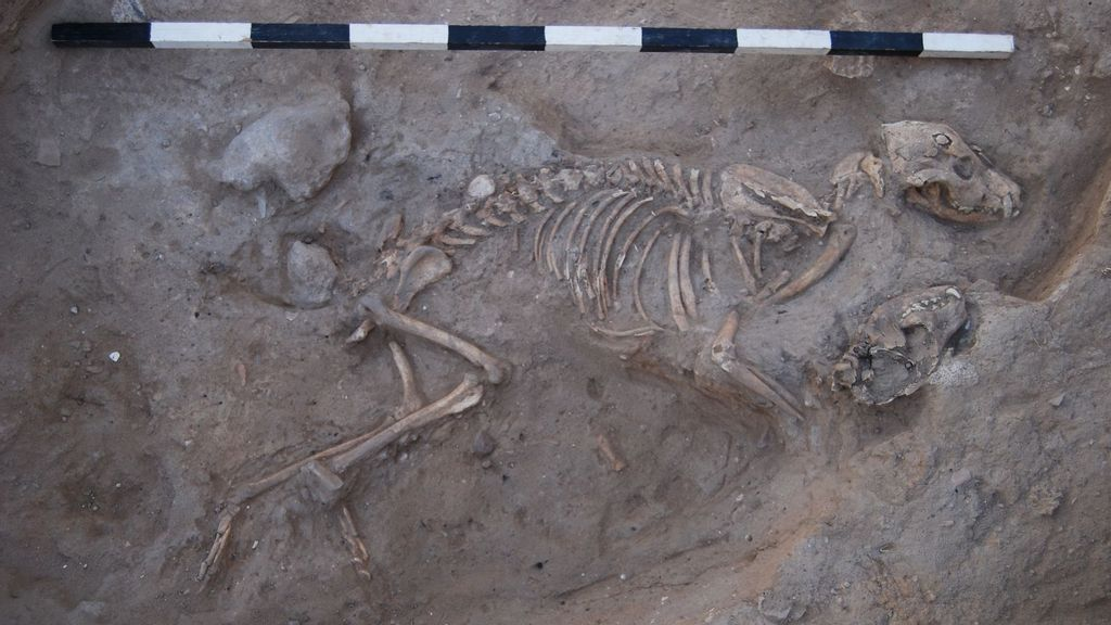 Dog-Gone Mystery: Ancient Canines Found Buried In Graves