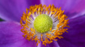 Common Floral Bacteria Can Induce Pollen Germination: Study