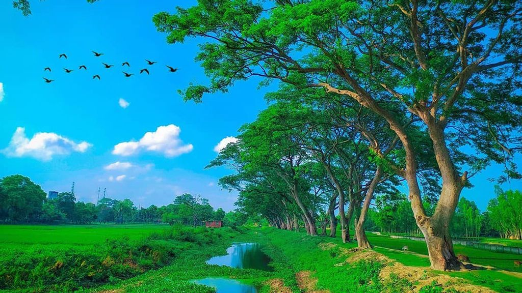 Wild Beauty Of Bangladesh's Landscape Revealed By Cameraman's Stunning Scenes
