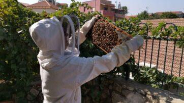 Beekeeper Miri Newcome inspects a beehive frame. (davidbrianbender.com)