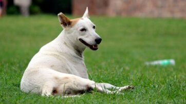 (Representative image) Animal activists of Andhra Pradesh expressed anger over the alleged killing of 300 dogs with poisonous injections by panchayat officials in West Godavari district. (Ravi Sharma/Unsplash)