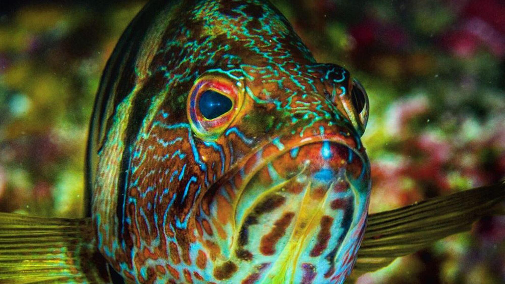 Seahorses, Demon Stingers and 'Grumpy' Fish: Photographer's Lens Captures Vanishing Ocean Habitats